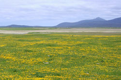 Machair habitat South Uist